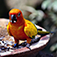 Colorful Birds - Wallpaper & Slideshow HD